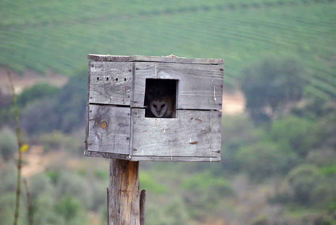 Especies invasoras y su relación forestales: Dr. Rafael Garcia